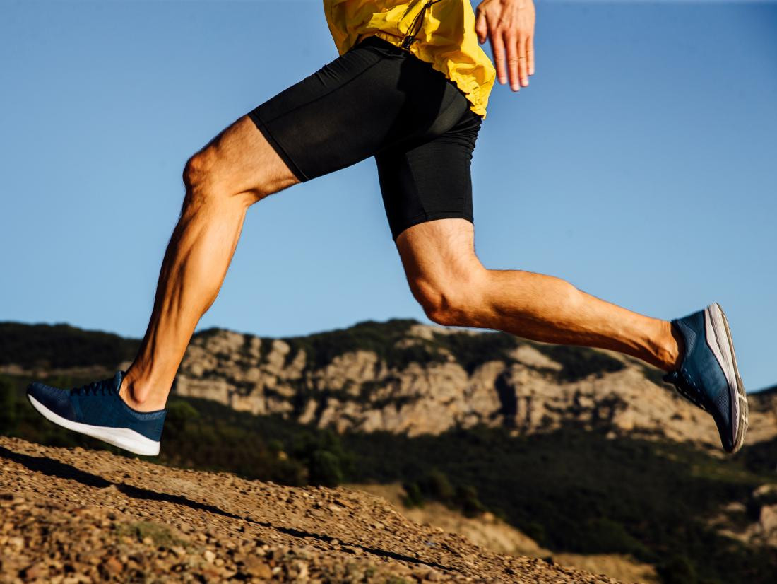 What are the Tendons in a Human leg?