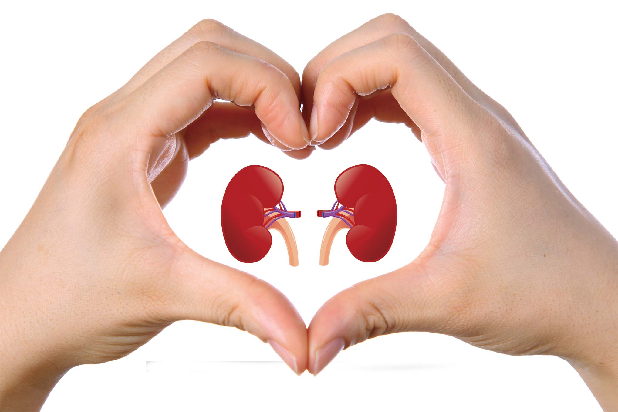 How To Take Care Of Our Kidneys