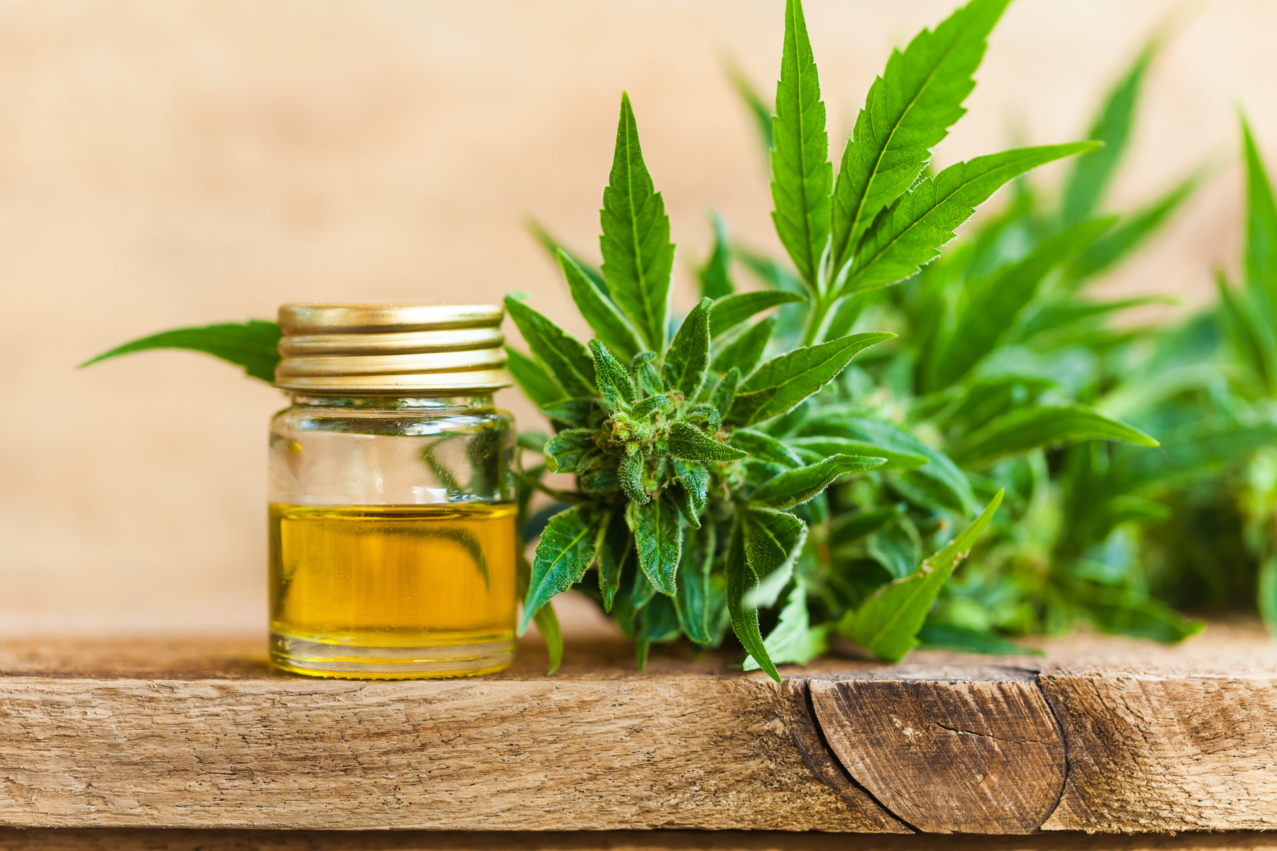 What Are The Various Significances Of Using Cannabinoid Oil?